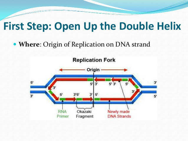 dna replication review for matching worksheet final 3 638