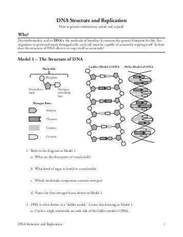 DNA Structure and Replication Ramsey School District