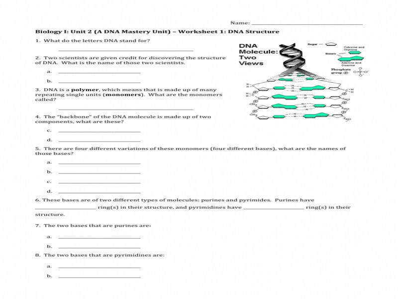 Worksheet 1 – Dna Structure