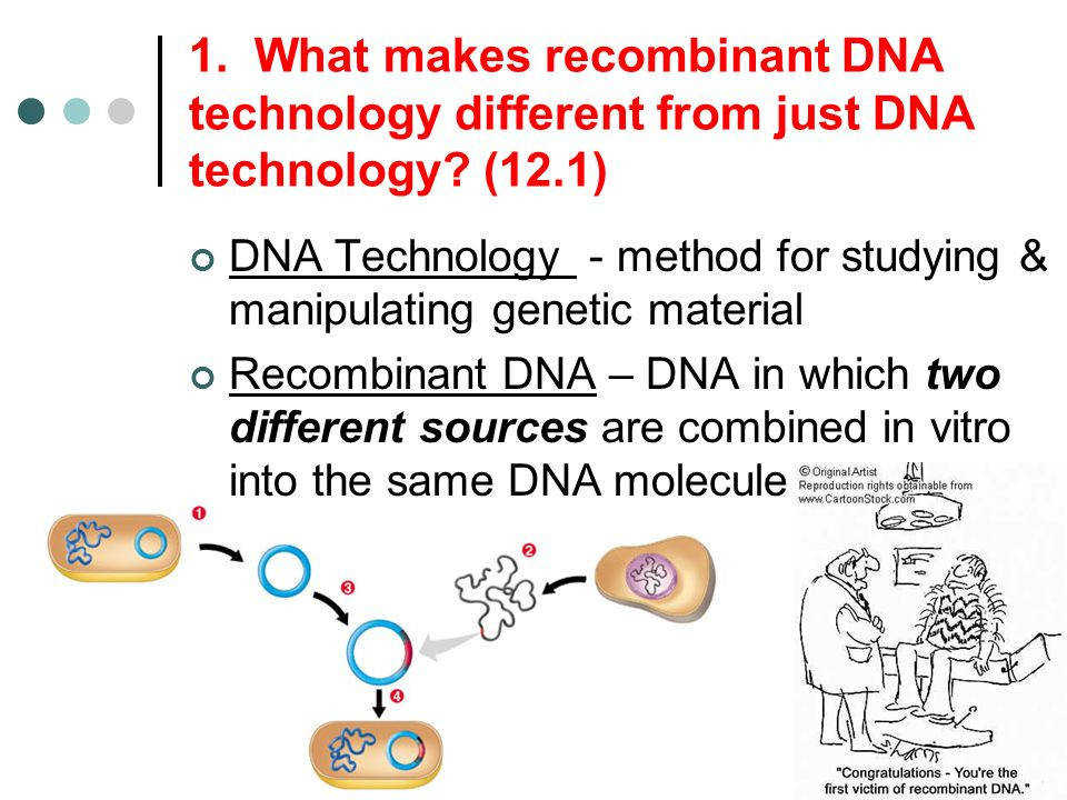 Re binant DNA Technology Worksheet PDF Biology Exams 4 U