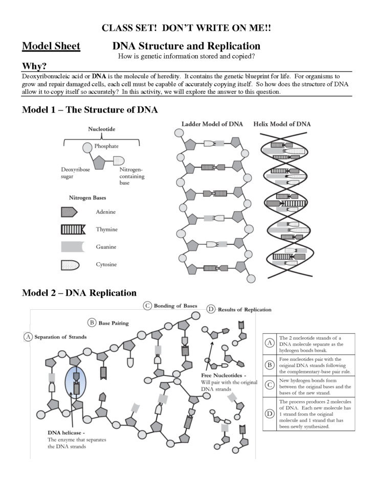 Medium Size of Worksheet dna Replication Worksheet High School Dna Rna & Replication Worksheet Dna