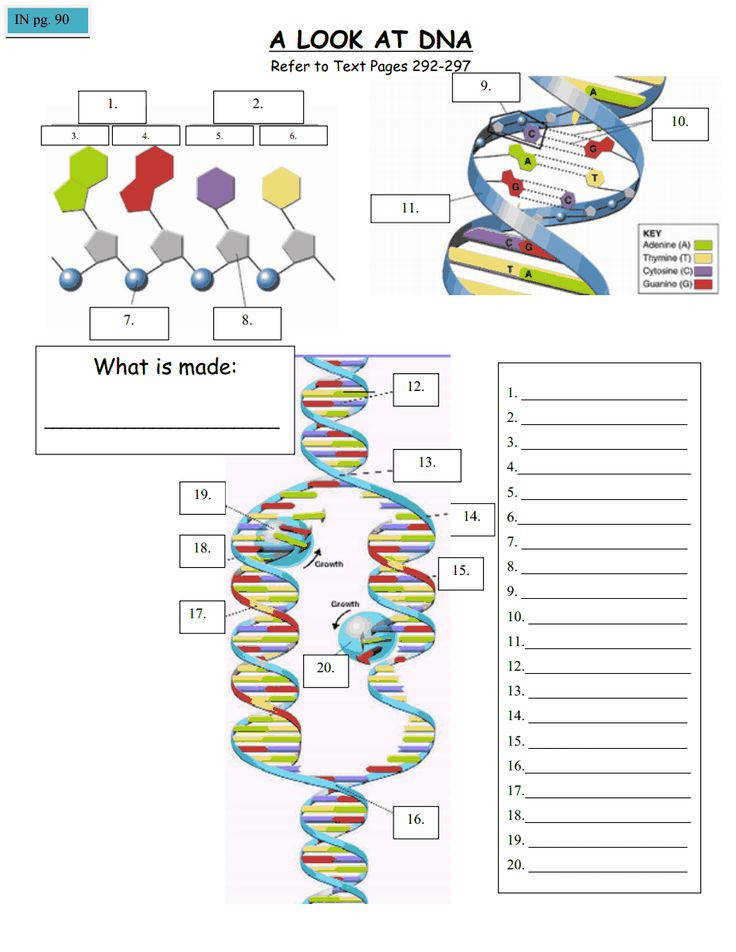 Agricultural Biology Great DNA identification worksheet Learn more about the animal genetics experts at
