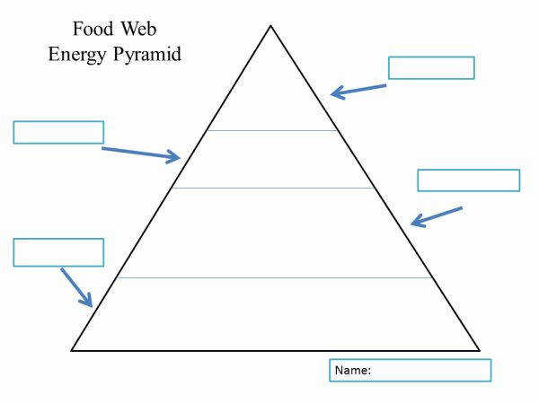 Food Web Energy Pyramid Template