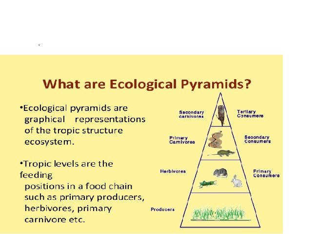 Ecological Pyramids Worksheet Worksheets