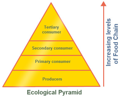 Ecological Pyramid Pyramid of Numbers with Diagram