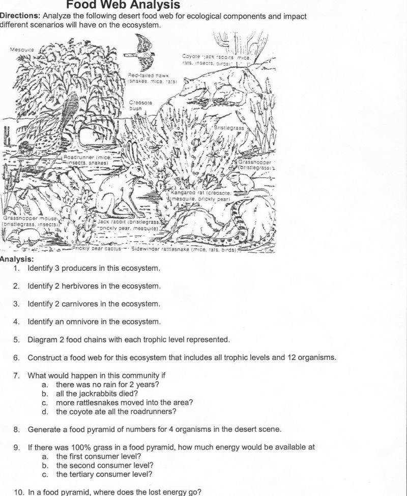 Food Chain Worksheets For Middle School