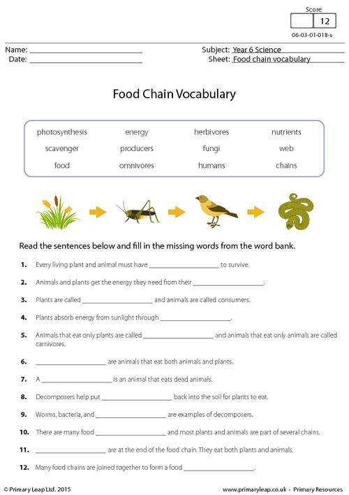 PrimaryLeap Food Chain Vocabulary Worksheet Living Environment Ecosystem