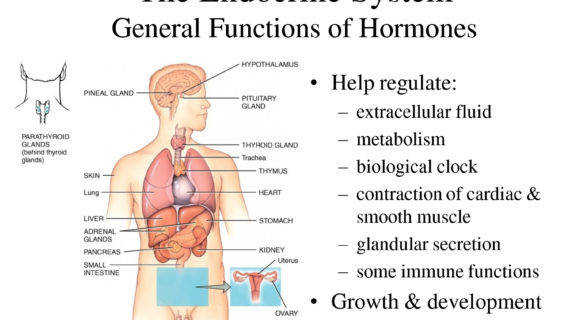 endocrine system digestive problems Download Smartphone
