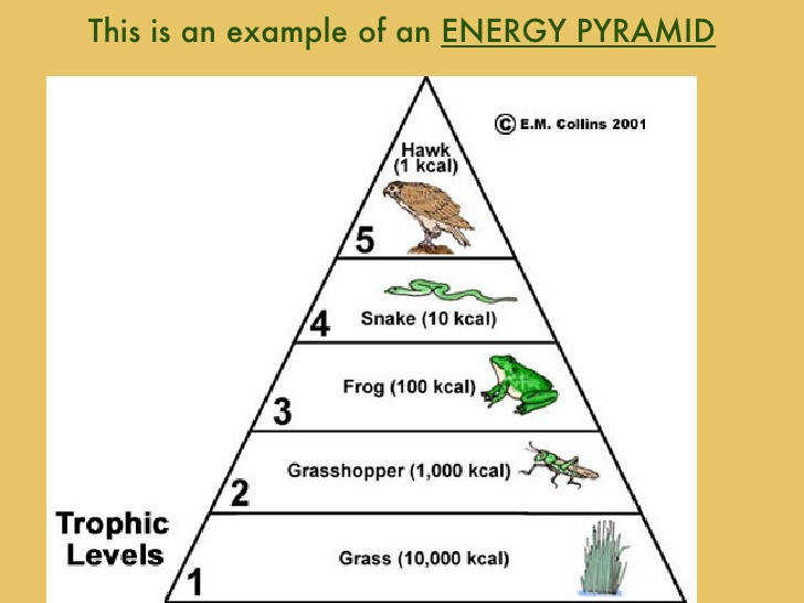Worksheets Energy Pyramid Worksheet food chain pyramid worksheet mysticfudge web lessons for middle school chains websfood