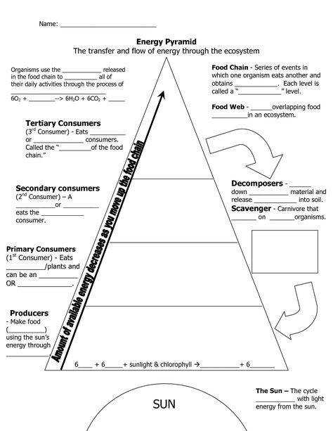 Ecological Pyramid Worksheet energy pyramid worksheets middle school invitation samples blog