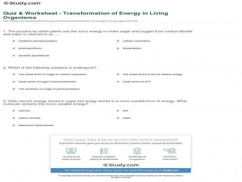 Quiz & Worksheet Transformation Energy In Living Organisms