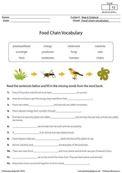 PrimaryLeap Food Chain Vocabulary Worksheet