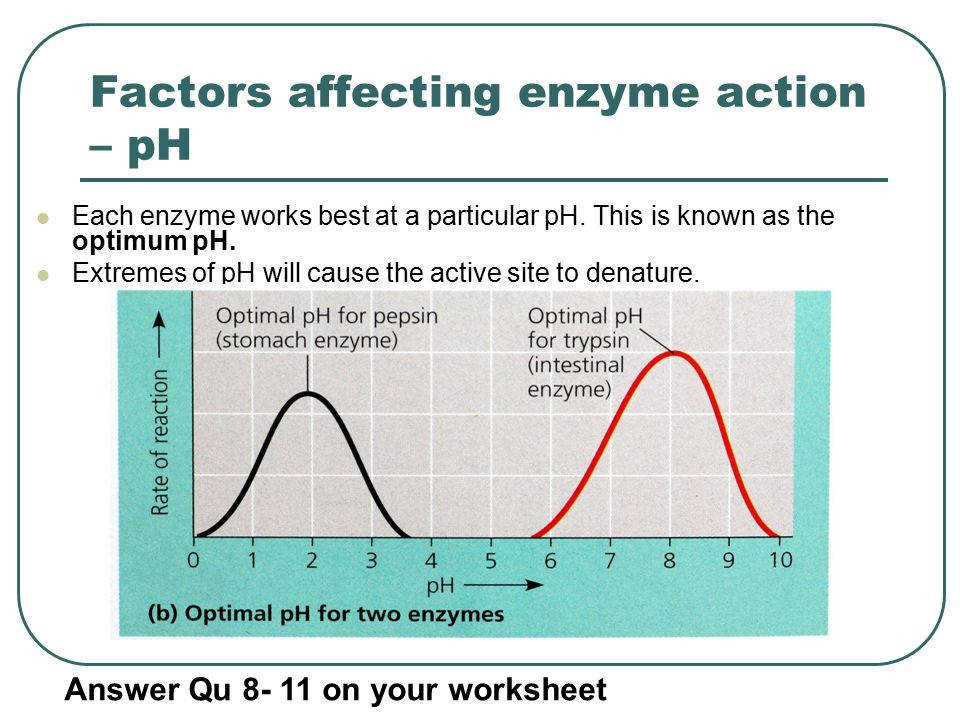 Factors affecting enzyme action – pH