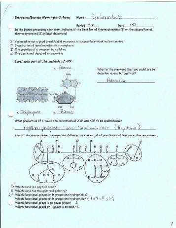 Ener ics Enzyme Worksheet O Romo Solon City Schools