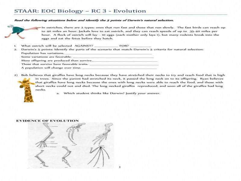 Darwin s Natural Selection Worksheet – Bioeoc