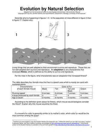 Evolution Worksheet Answers Evolution By Natural Selection