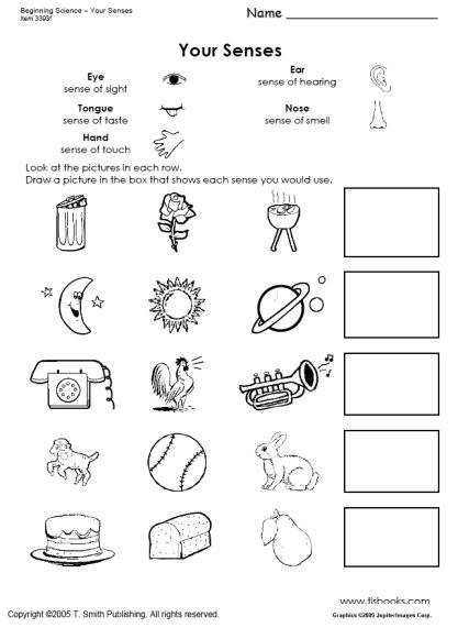 Beginning Science Worksheets about the Five Senses