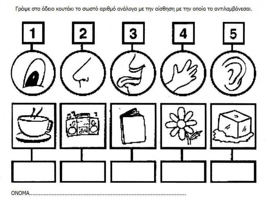 5 senses worksheet for kids 12