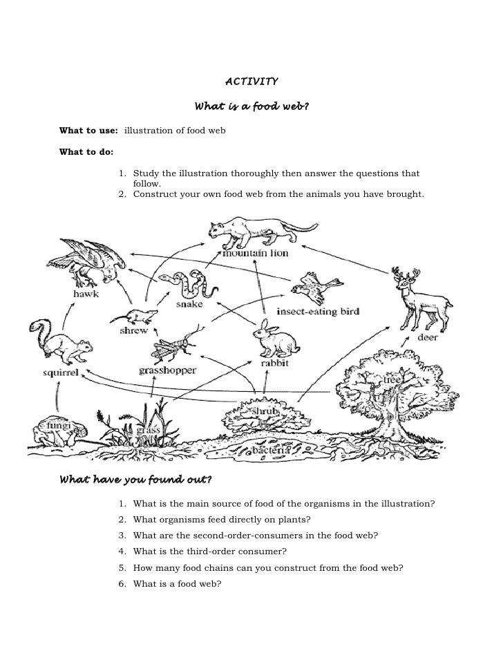 Food Web Worksheet Activity 6 Answers Worksheets