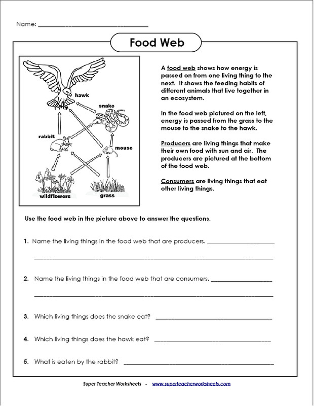 Printable worksheets on food chains and ecosystems