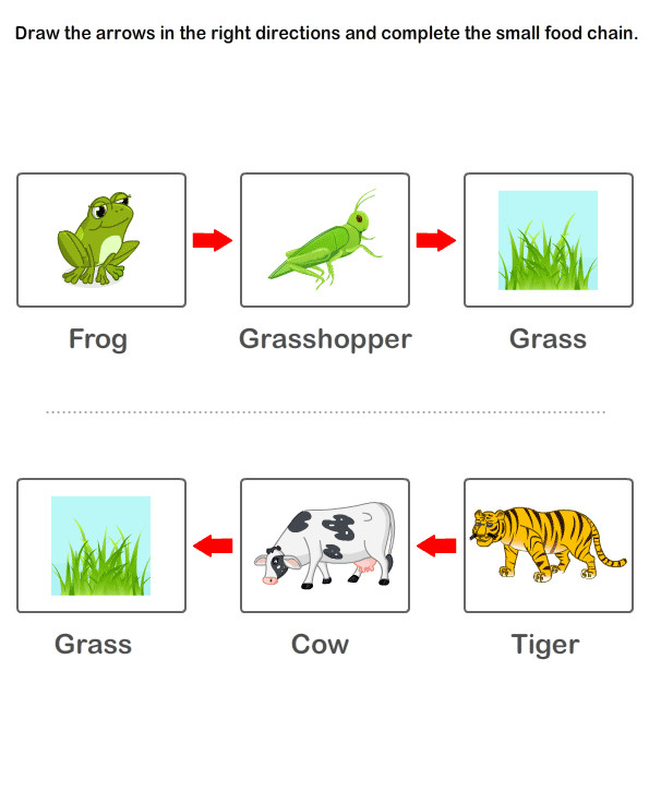 Food Chain Worksheets Kids