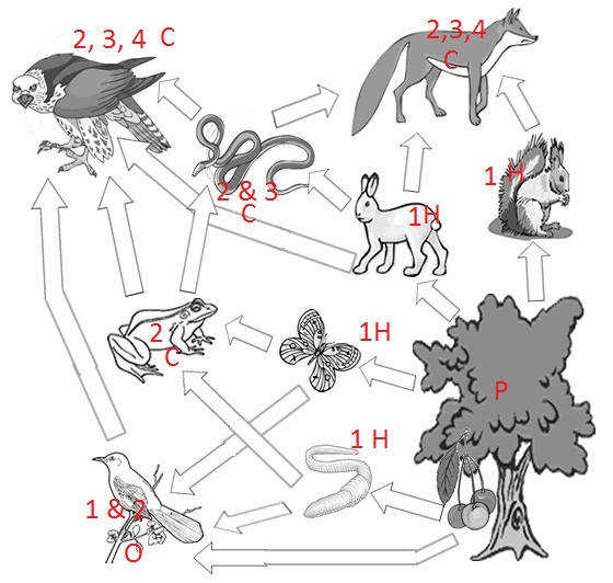 Food Web KEY