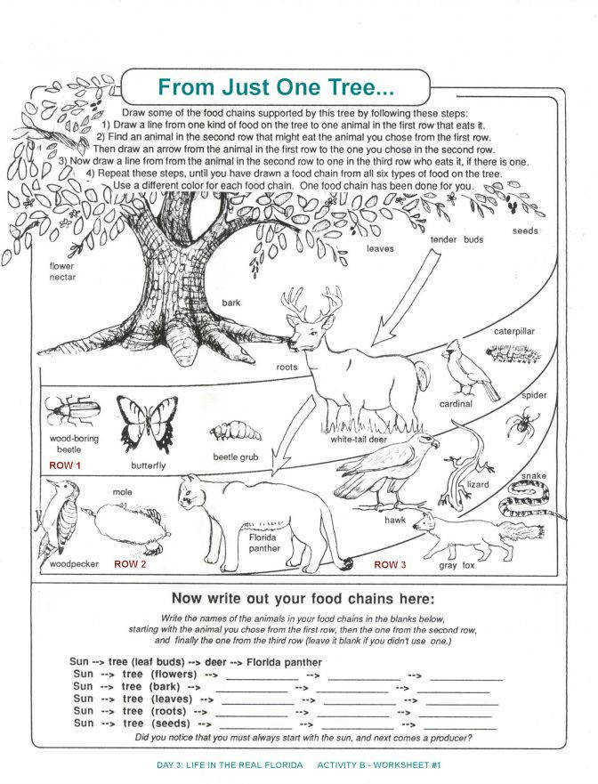 De posers Worksheets For Kids Archbold Biological Station Food Web Lesson Plans 5th Grade 916f018b189daa97d2c9688f781 Food Chain