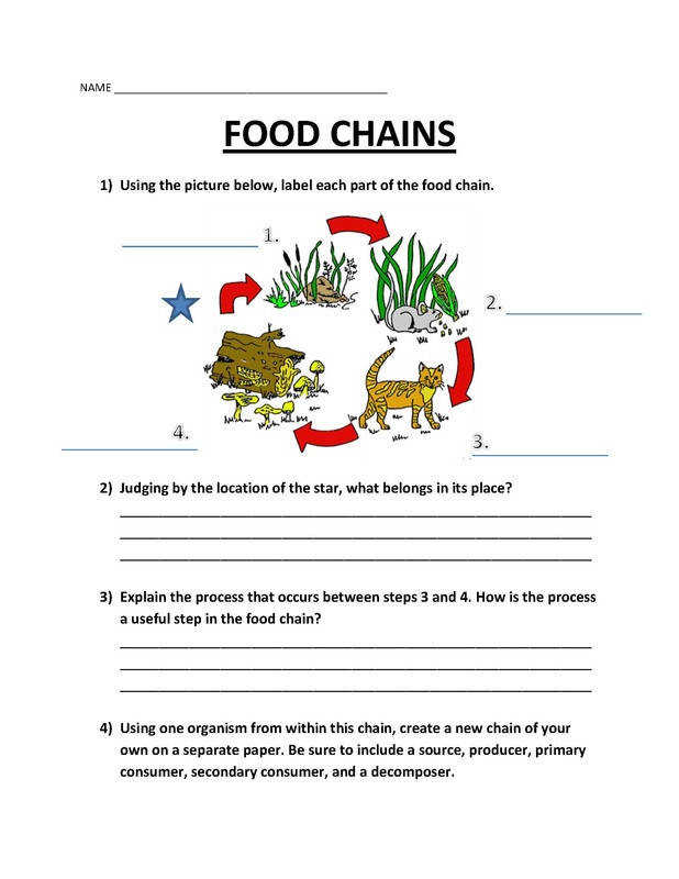 Food Webs Worksheets