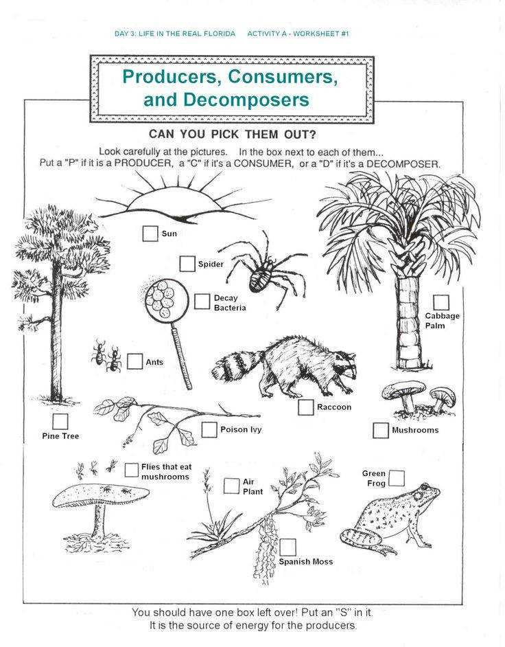 Ecosystems Worksheet s Beatlesblogcarnival