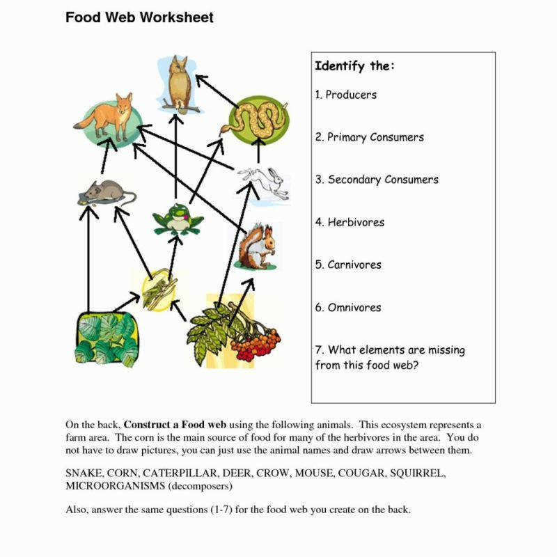 Food Chain Worksheet Foodfash Co