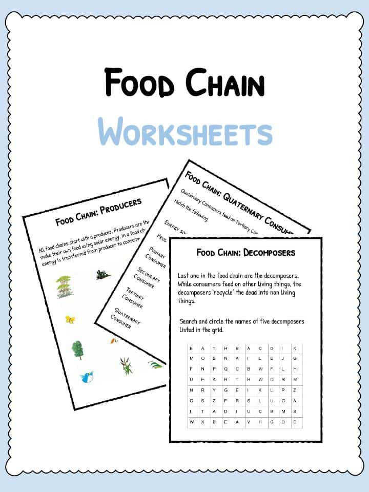 Download the Food Chain Facts and Worksheets