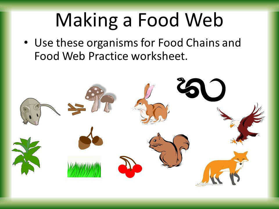 26 Making a Food Web Use these organisms for Food Chains and Food Web Practice worksheet