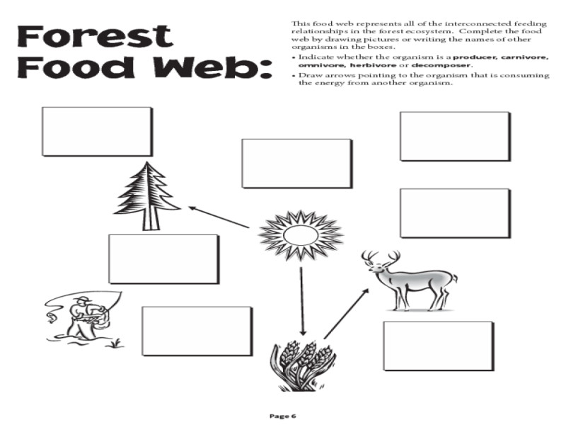 Food Web Worksheets Free Library And Print