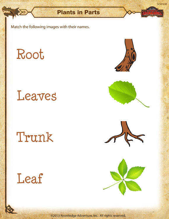 Plants in Parts Printable Science Worksheets for Kindergarten