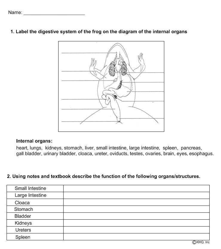 frog dissection worksheet. Black Bedroom Furniture Sets. Home Design Ideas