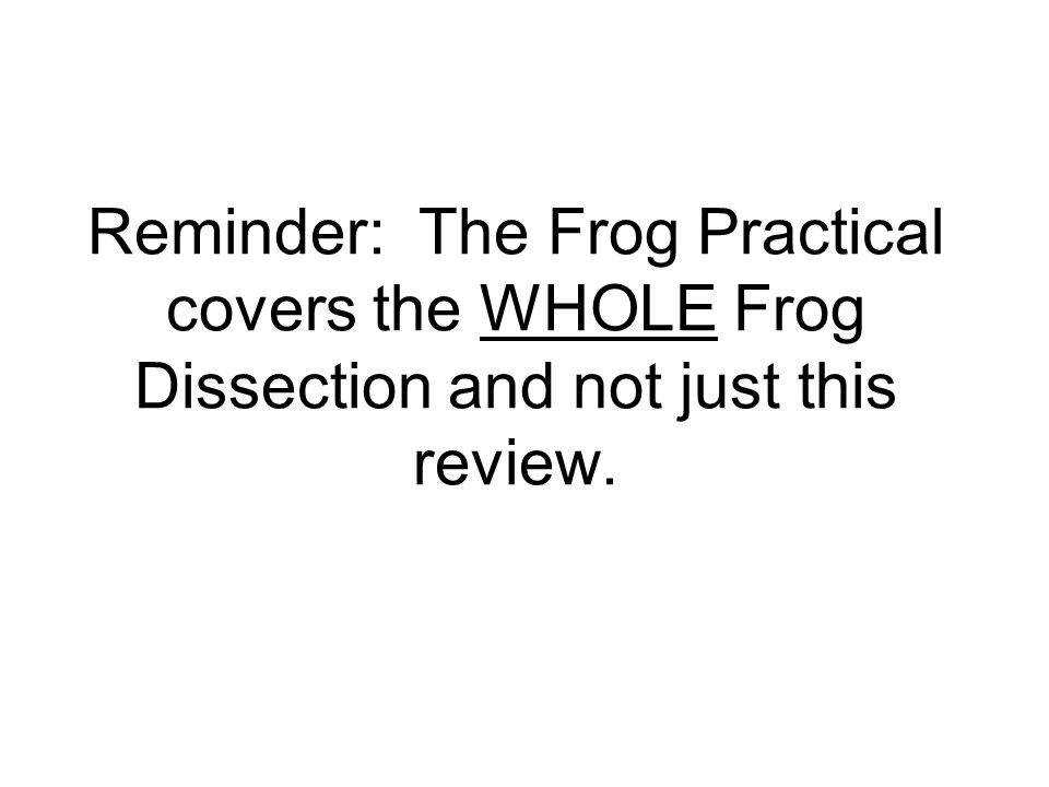 Frog Practical Review Reminder The Frog Practical Covers The Frog Dissection Worksheet