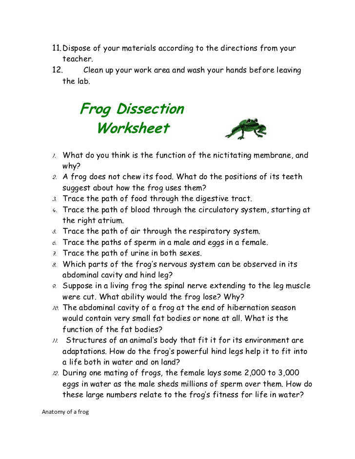 Frog Dissection Powerpoint - playitaway.me