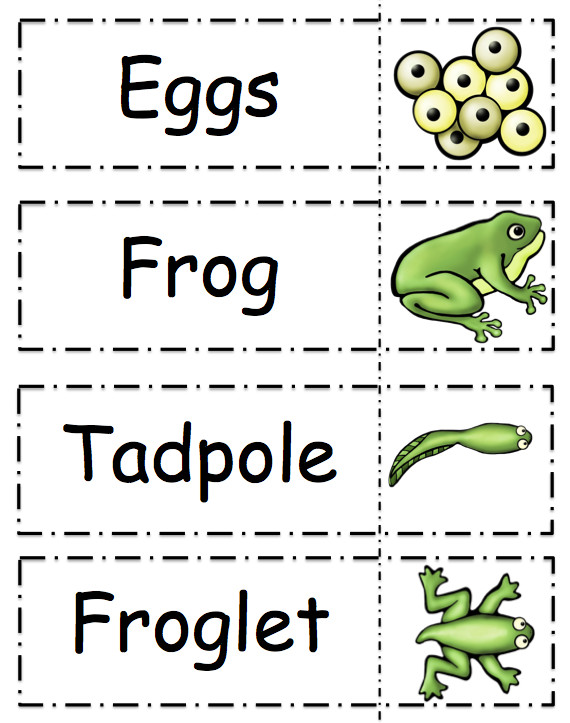 Frog Life Cycle Printable By Gwyn July 2014 No mentsFrog Life Cycle Printable
