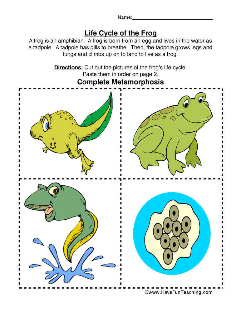 Frog Life Cycle Worksheet