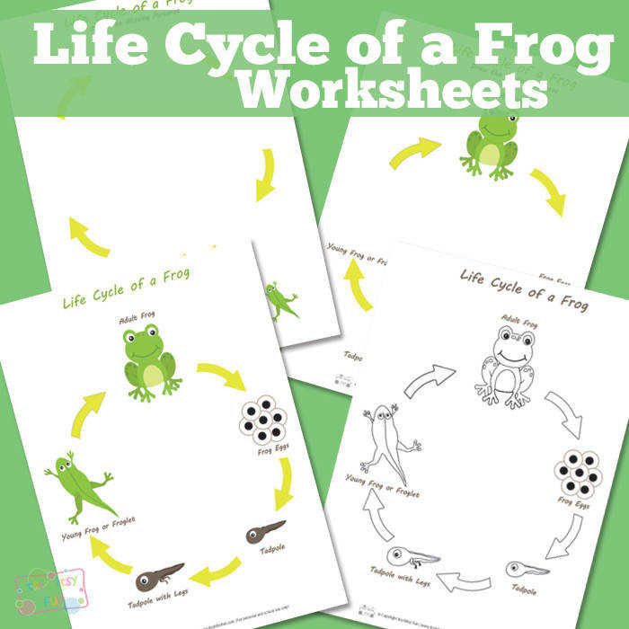 Life Cycle of a Frog Worksheet
