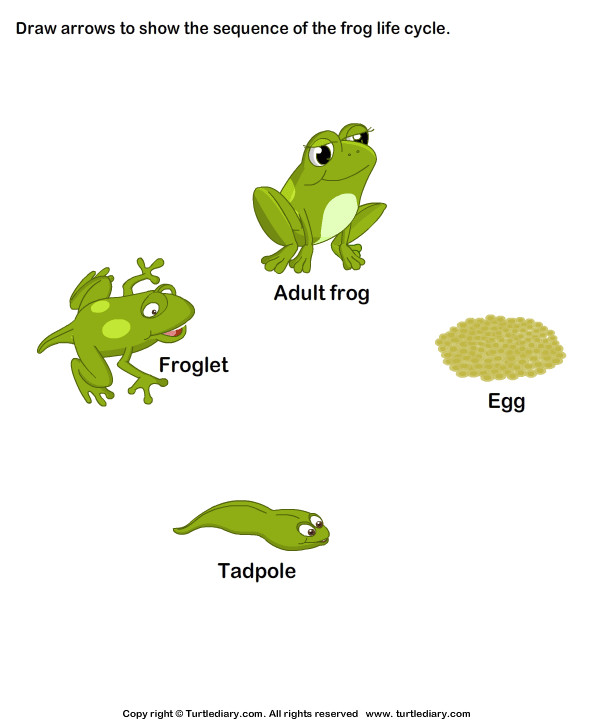 Sequence the Stages of Frog Life Cycle