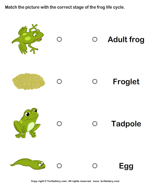 Frog Life Cycle Match with Correct Name