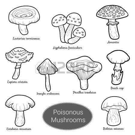 Black And White Set Edible Mushrooms Coloring Page With