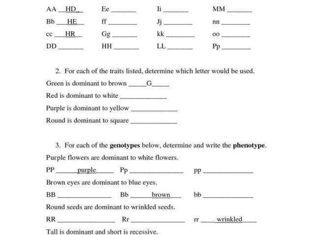 Genetic Problems Worksheet Worksheets Reviewrevitol Free Download by size Handphone