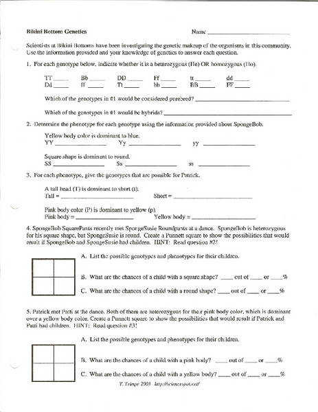 Genetics Word Problems Worksheet Answers Templates and Worksheets