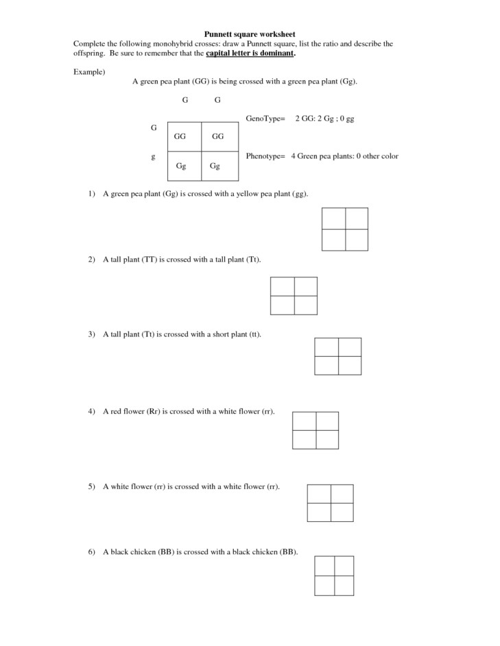 Medium Size of Worksheet what Are The Genotypes The Parents Genetics Practice Problems Worksheet