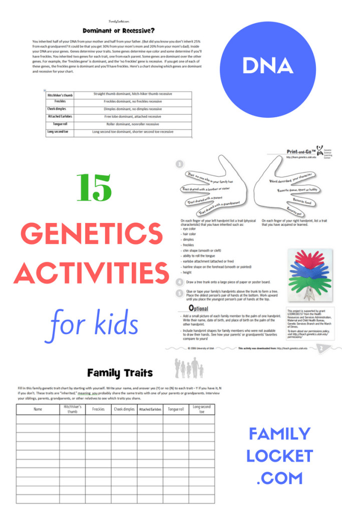 Here are 15 activities to teach kids about DNA genetics and heredity Each of these ideas are free and have worksheets printables