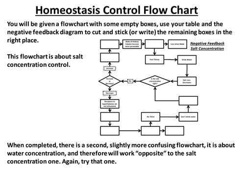 Negative Feedback Homeostasis of Water cut and stick by JakeADewar Teaching Resources Tes