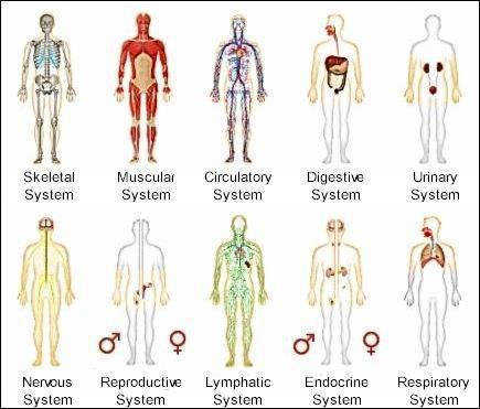 Printable Human Body Systems Worksheets ch nology worksheets science human