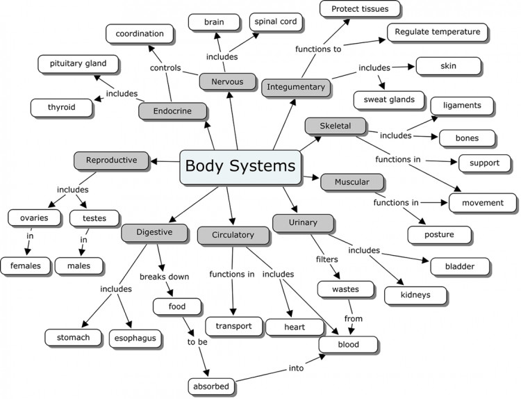 tildee tutorial image This tutorial is on the Human Body systems